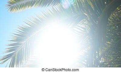 The sun's rays make their way through the branches of palm trees. Sky, clouds, breeze