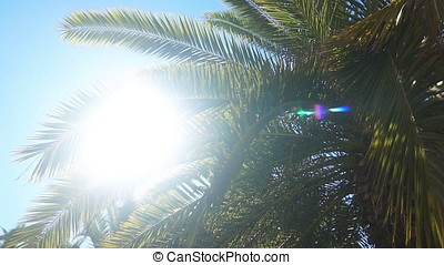 The sun's rays make their way through the branches of palm trees. Slow motion