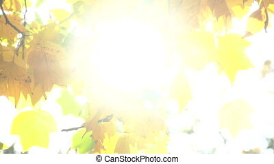 The sun's rays shine through the autumn leaves - Colorful...