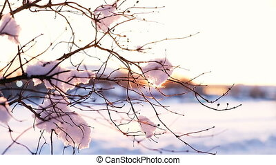 The sunset rays shine through a snowy swinging branch, slow motion