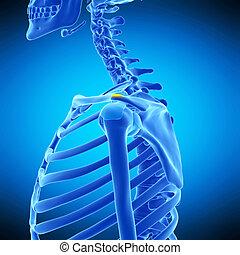 the supra acromion bursa - medically accurate illustration...