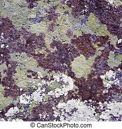 The surface of a rock covered by a lichen