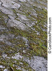 the surface of the stone overgrown with green moss