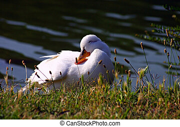 The sweetest duck in the world