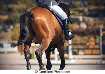 The tail of a horse, galloping away across the arena.