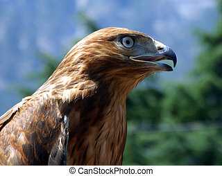 The tamed falcon on a background of Crimean mountains