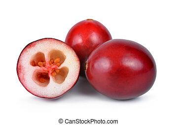 The tasty american cranberries ( Vaccinium macrocarpon ) ...