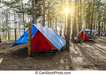 The tents are standing in the forest