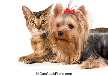 The terrier and cat