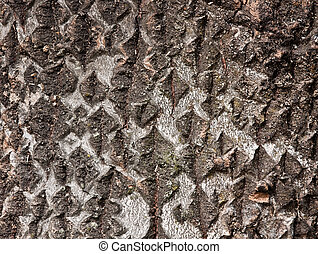 The texture of a bark of a birch tree