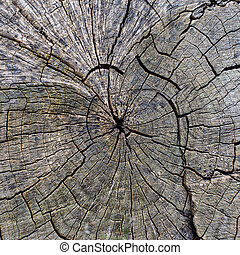 texture of a cracked tree, beautiful wood