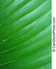 The texture of a green leaf