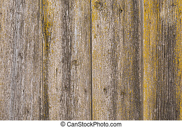 The texture of an old wooden fence made of boards covered with moss and mold.