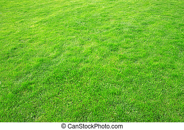 The texture of green grass