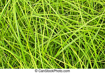 The texture of the green grass