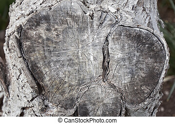 The texture of the tree on the log. The place of the cut off...