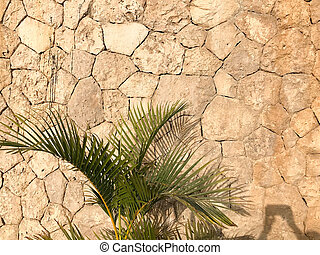 The texture of the wall is made up of beautiful natural old ancient shrewded yellow stones, cobblestones, masonry with uneven seams and a tropical plant, palm tree. The background.