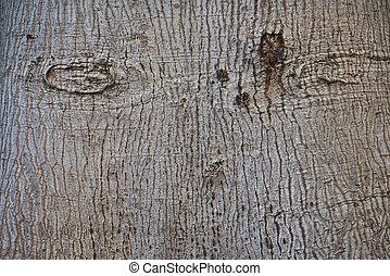 The texture of tree bark gray