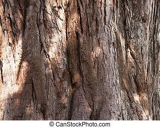 The texture of tree bark