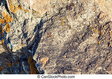 The texture stone. Natural background. Stone on a background of nature