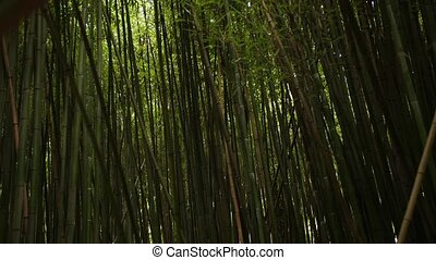 the thick green bamboo grove