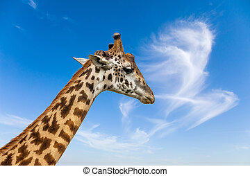 The thoughtful giraffe