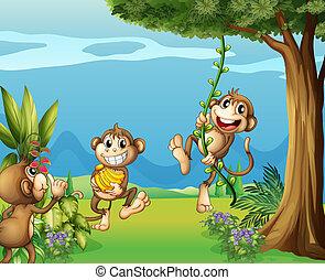 The three monkeys at the hills
