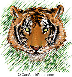 The tiger sketch