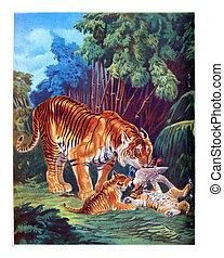 The Tiger, vintage engraving.