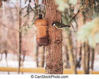 The tit feeds in the trough. Winter. The feeder is made of a plastic bottle.