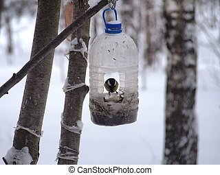 The titmouse feeds in a feeder made of a transparent plastic bottle.