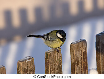 The titmouse on a wooden fence