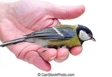 The titmouse sitting on a hand 2
