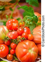 The tomato (Solanum lycopersicum)