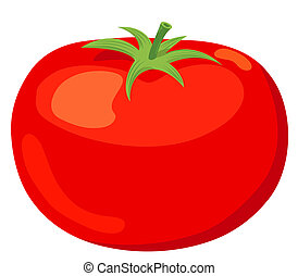 The tomato. Vector illustration. Isolated on white background.