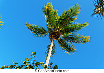 the top of a palm tree with green leaves on blue sky background