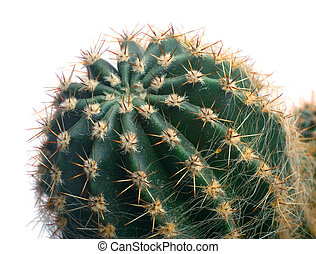 The top of cactus. Macro.