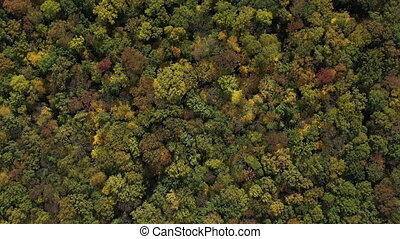 The tops of the trees of the autumn forest, top view in slow motion. Aerial top view of beautiful trees aerial view on a warm autumn sunny day. Beautiful nature in the countryside. Large green forest.