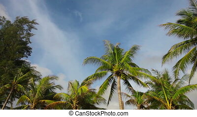 tops of tropical trees