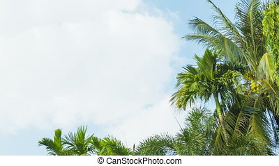The tops of tropical trees swaying against the sky