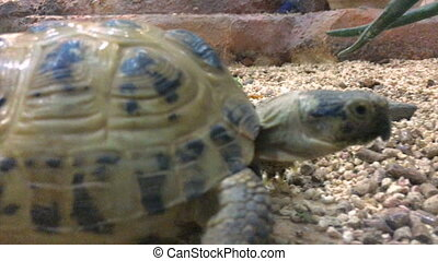 the tortoise creeps in Aviary