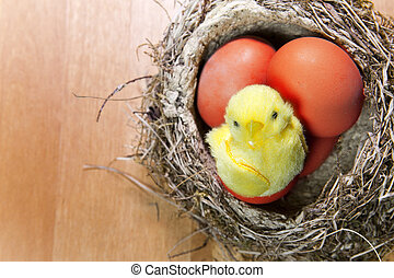 toy chicken sits in a nest on brig