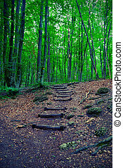 trail in the forest of wooden steps. Vintage style