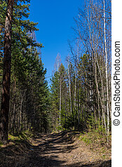 The trail in the spring forest with foliage in the natural park in Russia