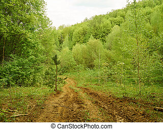 The trail is beautiful dense forest. Forest landscape.