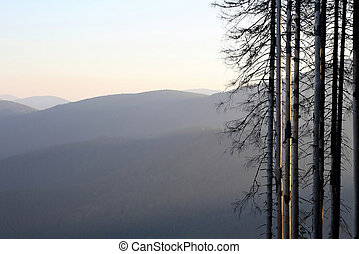 the tree against a sunrise in the mountains