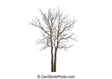 The tree branch isolated on white background