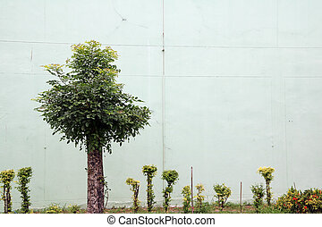 The tree by the light green concrete wall. Green grass and small tree around the tree trunk.