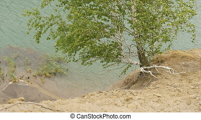 The tree grows over the cliff of a mountain lake