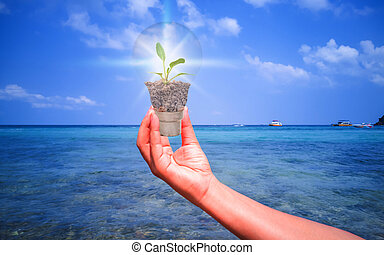 The tree in the hand-held lamp of the people on the sea with the concept of environmental preservation